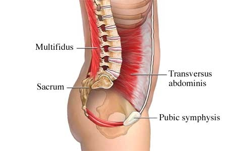 inner_core_muscles